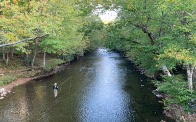 Protecting our streams from nonpoint source pollution